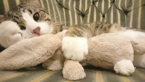Embassy Cat Tweets Assange Still Missing