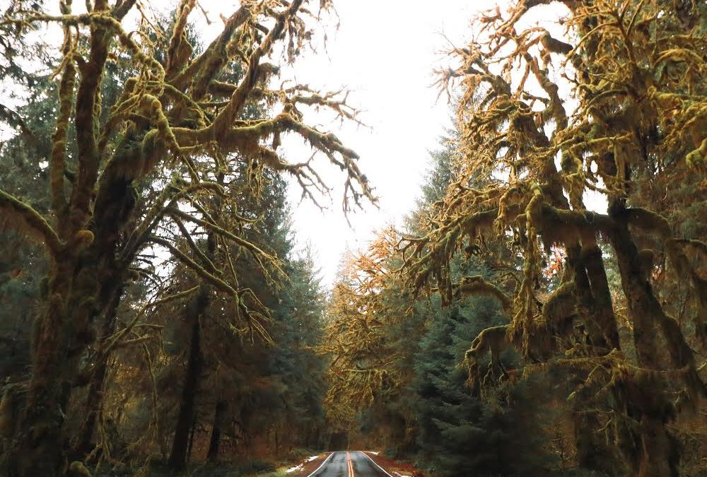 Amazing Locations for a Van Trip Around the Olympic Peninsula