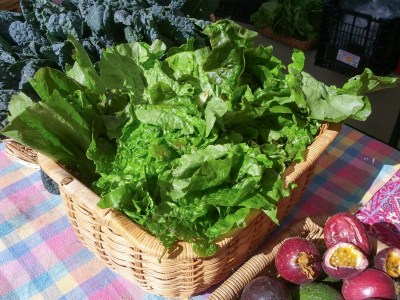 Lettuce at Free Farm Stand