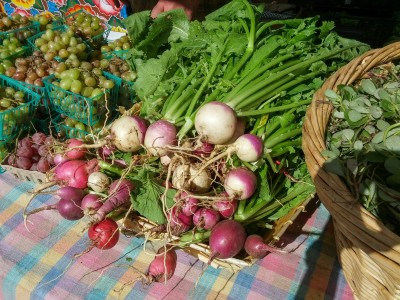 Turnips at Free Farm Stand