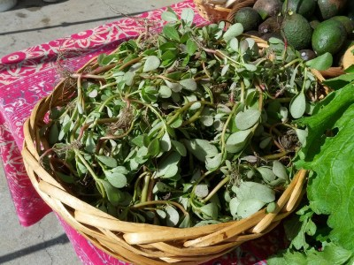 Basket of purslane at Free Farm Stand