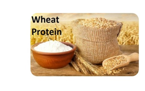 wheat protein isolate