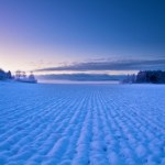 A dim snowy field at Christmas time.