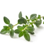 A sprig of thyme.