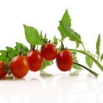 A bunch of cherry tomatoes on a green, leafy branch.
