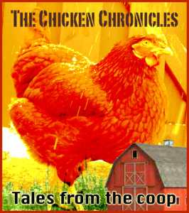 The Chicken Chronicles: Tales from the Coop