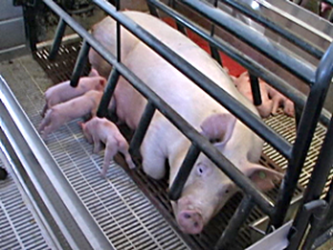 World's Largest Pork Producer Counters Criticism with New PR Campaign
