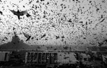 Homing Pigeons. 120,936 homing pigeons were released to celebrate the 75th anniversary of the Netherlands Homing Pigeon Keepers Association. Le Mans 11 June 2005, 6.45 am Photo Jan van IJken