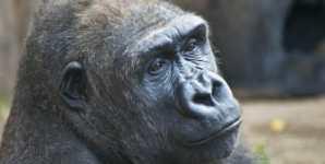 Seeing through the Speciesist Bias in the Field of Animal Behavior