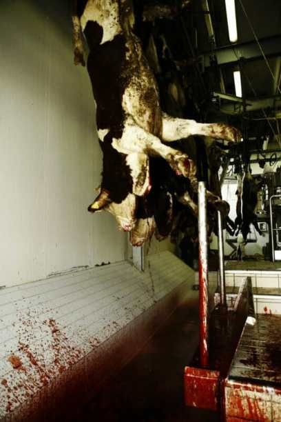 A day in an Italian slaughterhouse. Photo by Francesco Scipioni