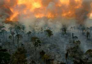 photo of rainforest burning