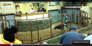 Video: Little Princess the Calf's Story Brings Out the Vegan in Us All