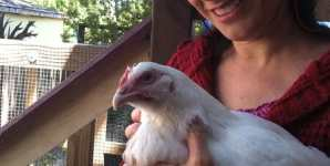 Michael Pollan Talks Trash about Chickens Just Like Big Ag He Denounces