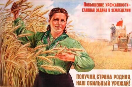 russian_wheat_450