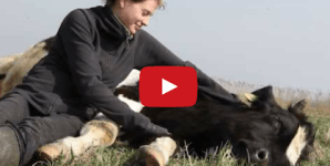 Vegan Activist Put to Shame By World's Happiest Cow
