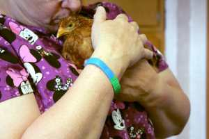 Baby Hen Found Near Death Off Busy Street