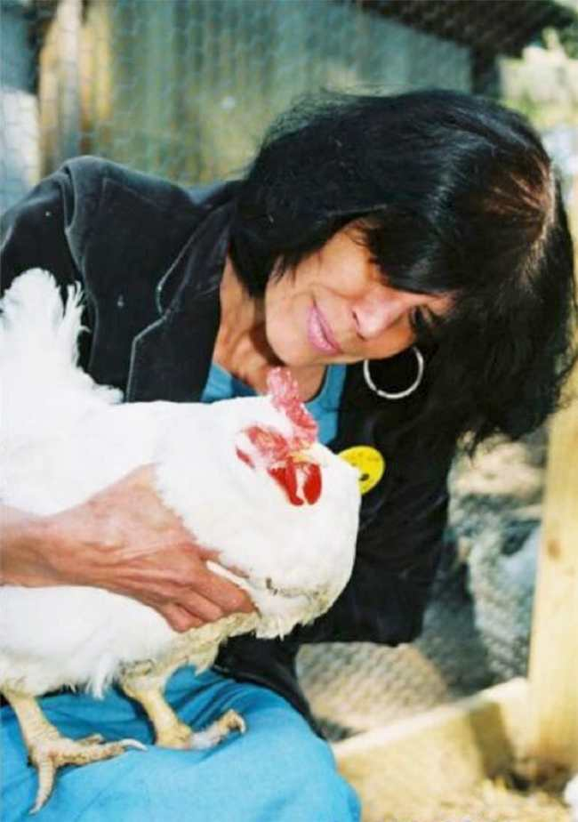 "Karen Davis holds a rescued ""broiler breeder"" hen blinded by ammonia fumes in a Tyson facility in Maryland. UPC sanctuary photo by Bruce Andrew Peters"