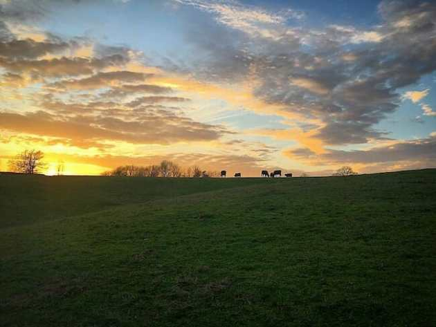 sunset on a farm with cows