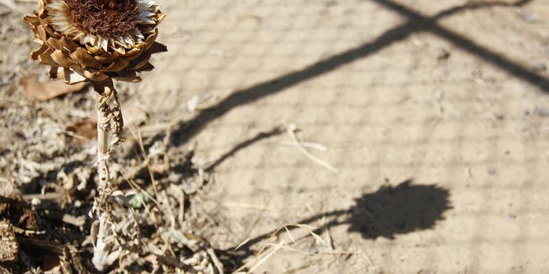 Desolation and despair in the Central Valley drought of '14