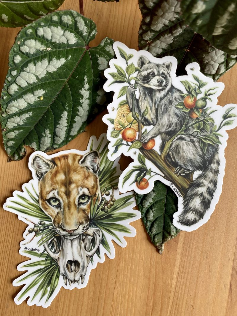 Raccoon Sticker Florida Panther Sticker