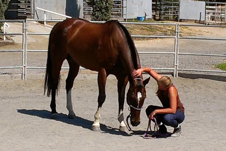 Lowering Horse's Head