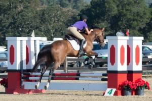 Elijah showing at Woodside in a Jumpers class in 2016.
