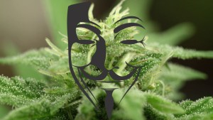Guy Fawkes Mask Cannabis