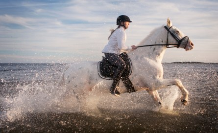 m-doucette-production-william-huber-horse