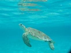 200605 turtle
