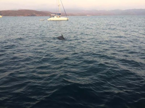 Dolphins in the anchorage almost daily (PC Jason)