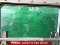Fish madness under FL