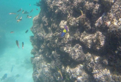 Critters on the reef in Balandra