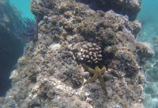 Sea star!