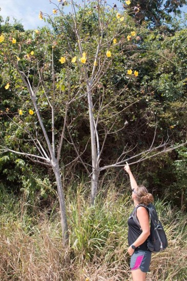 A tree en route to secret beach - Brenda wondering what it is, Jody not knowing
