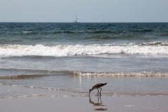 Bird and sailboat