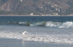 Egret in the waves off Chantli Mare