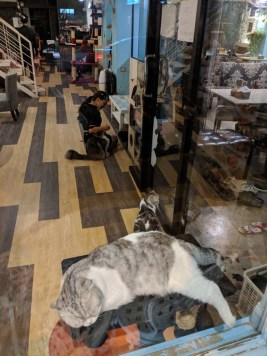 Cat cafes were popular in Thailand - weird