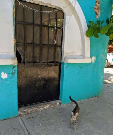 La Cruz kitty