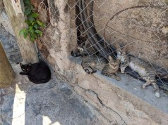 And stray cats