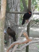 Bird Sanctuary near Copan, Honduras