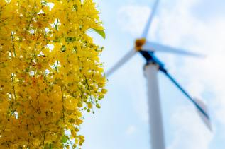 Clean energy concept from the wind in nature