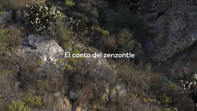 El Canto del Zenzontle - Selección Oficial Freeman Film Festival 2017