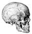 oddities on science channel, strange skull