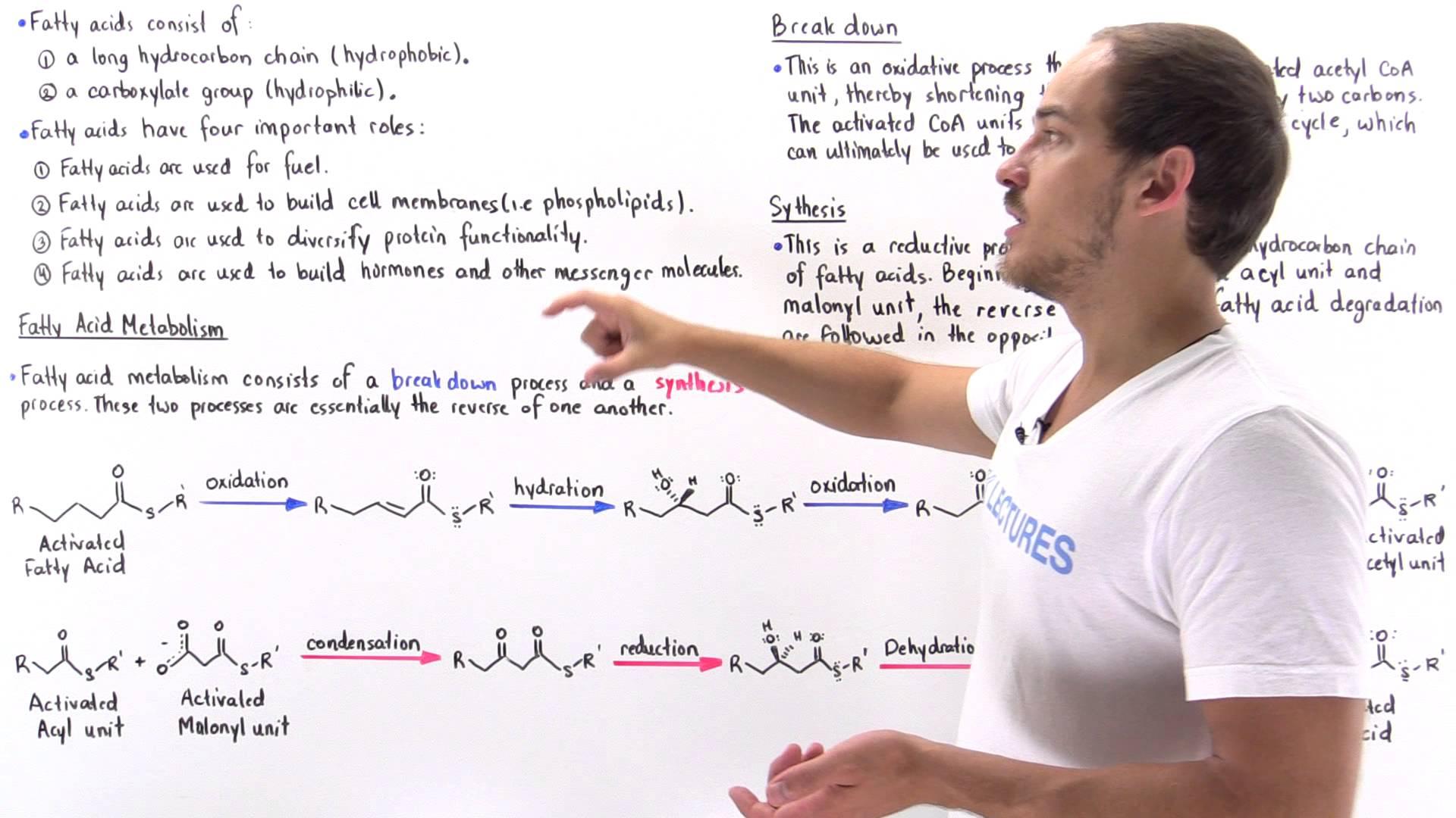Introduction To Fatty Acid Metabolism