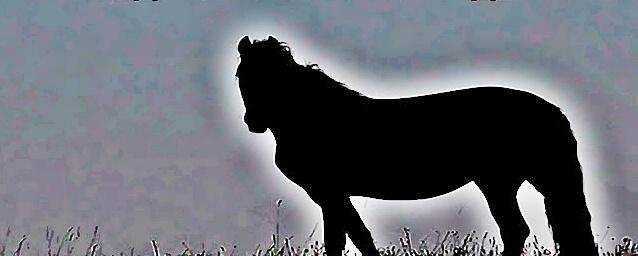 Melyik irányba néz a ló? Teszt!