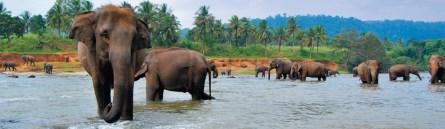 Where the Wind Blows East-srilanka