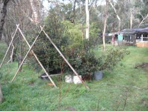 Manifesting Trees For our Garden - Free Neville Goddard