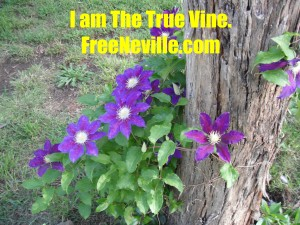 Neville Goddard Quotes - I am the true vine