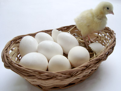 Eggs and Chikens