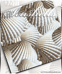 Seashells Patterns Design
